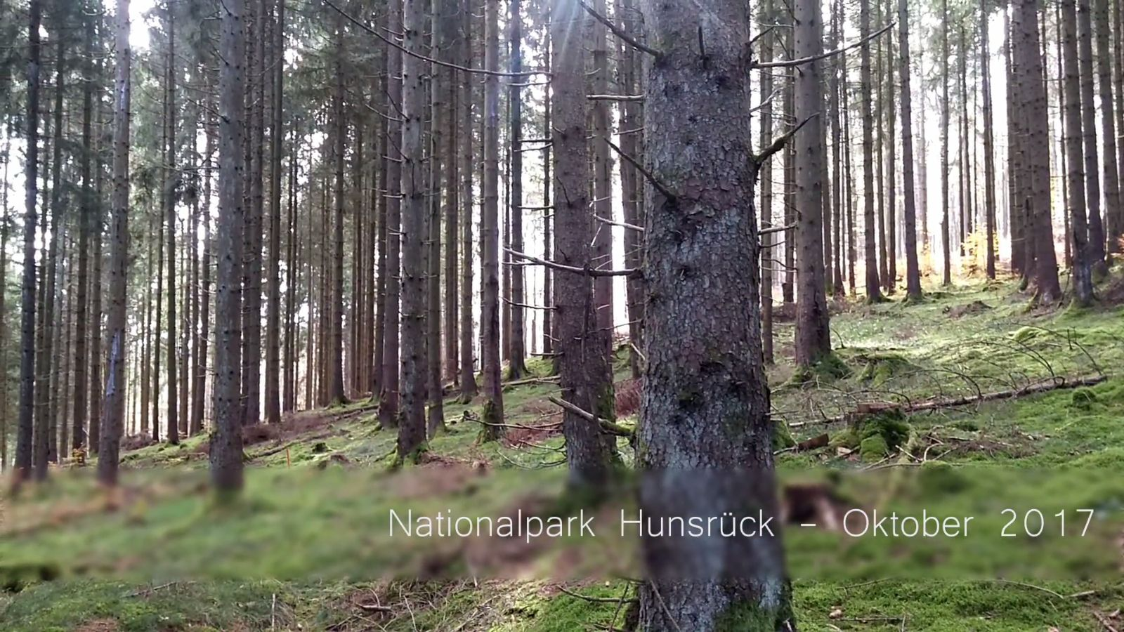 Nationalpark Hunsrück